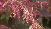 Une plante potagère qui s'invite au parterre :