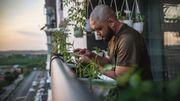 La multiplication végétative : faire pousser des légumes chez soi sans graines ni jardin