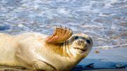 6 animaux insolites et surprenants à observer au large de la mer du Nord