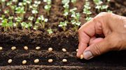 Comment produire ses plants si les jardineries sont fermées ?