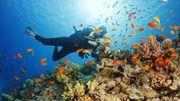Un tour du monde pour les passionnés de plongée