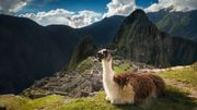 Pérou: derrière le Machu Picchu vide, tout un secteur touristique malmené
