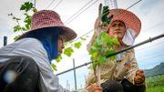 Le vin se fait une place sous le soleil de Thaïlande