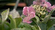 Présentation de quelques nouvelles variétés de plantes