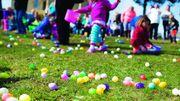 Aywaille : des milliers d'œufs seront à ramasser demain !