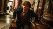 """""""Les Animaux fantastiques"""" démarrent très fort au box-office nord-américain"""