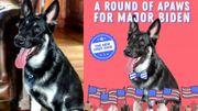 """La cérémonie d'investiture de"""" Major Biden"""" au profit d'une association de chiens abandonnés a été suivie par des milliers de personnes"""