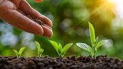 L'engrais… Optez pour l'alternative naturelle faite maison!