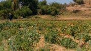 Abrha We Atsbha n'attend pas le retour de la pluie pour cultiver. Les systèmes de conservation d'eau et d'irrigation donnent vie aux champs.