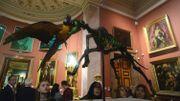Les animaux empaillés de Jan Fabre à l'Ermitage choquent les Russes