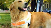 La relation entre un aveugle et son chien-guide