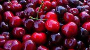 Comme chaque année, le premier weekend de juillet, les cerises seront à l'honneur en république libre de Tihange.