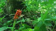 Une faune et une flore protégées.