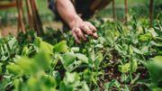 Créer un potager bio selon les principes de la permaculture