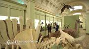 Musée d'histoire naturelle de Tournai: une histoire ancienne mais des préoccupations d'aujourd'hui