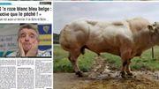"""La revue de Presse : Michael O'Leary déclare """"le Blanc, Bleu Belge est moche"""", qu'en pensez vous?"""