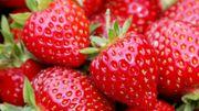 """""""Nous sommes déçus par les fraises parce que nous privilégions l'aspect"""""""
