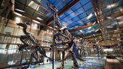 A la découverte des expositions virtuelles du Musée des Sciences naturelles de Bruxelles
