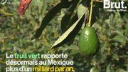 """""""L'avocat, c'est l'or vert""""… Au Mexique, l'industrie de l'avocat responsable de maux sanitaires et écologiques"""