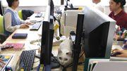 """A Tokyo, on teste la """"Ronronthérapie"""" dans les bureaux!"""
