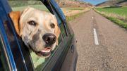 Qui va s'occuper de vos animaux pendant vos vacances?