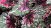 C'est le moment de multiplier les plantes d'intérieur