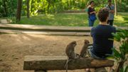 Macaque et touriste, bonner entente ?