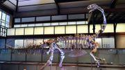 Le platéosaureBen a rejoint la Galerie des Dinosaures pour ses 10 ans