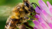 Plan Bee - Nature et Progres