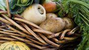 Les fruits et légumes de saison en septembre