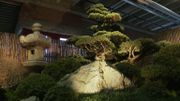 Le bonsaï, l'art de cultiver en miniature