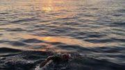 13h pour traverser la Manche à la nage, l'exploit d'un Namurois