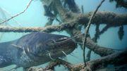 Le Jardin Extraordinaire nous emmène à la découverte des poissons géants