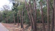 Des arbres d'un bois à Woluwe-Saint-Lambert élagués jusqu'au tronc: que s'est-il passé?