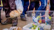 Débat : Après les chiens et les chats, faut-il interdire la vente de tous les animaux sur les marchés?