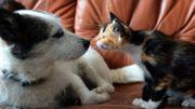 Votre animal de compagnie peut sauver des vies!