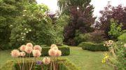 Les bulbes sont bien présents au jardin