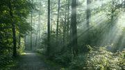 Jour du dépassement : pourquoi il est urgent de protéger nos forêts