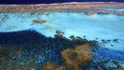 Un ambitieux programme d'élevage de larves de coraux pour sauver la Grande Barrière
