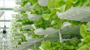 Agriculture urbaine: le futur sera-t-il un peu plus vertical?