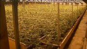 La proposition de la ministre se base sur différentes études universitaires proposant une offre régulée dans ce qu'on appelle des 'Cannabis social clubs'
