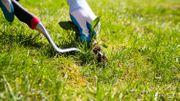 Les pesticides au jardin : terminé