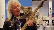 [Zapping 21] Brian May joue pour un koala rescapé des flammes