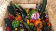 Les Saveurs de chez nous : Des fruits et des légumes savoureux et bios en direct du plateau de Herve à la Ferme 3 Point Zéro et un nouveau pave bleu de Stavelot