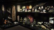 Un cabinet de curiosités reconstitué par le Musée L