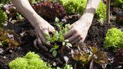5 étapes pour commencer la permaculture chez soi