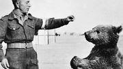 C'est l'histoire d'un animal : Wojtek, un caporal au poil !