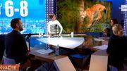 Focus sur le retour du lynx en Belgique &...