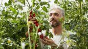 5 étapes pour reproduire ses semences facilement
