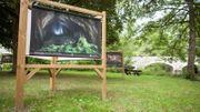 Superbe exposition en plein air en Forêt de Saint-Hubert